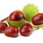 Rosskastanien-Extrakt stärkt Gefäße und fördert die Durchblutung