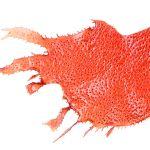 Hydrolyzed Rhodophycea Extract strafft das Gewebe und schützt die Haut